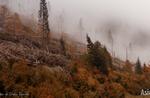Ad un anno dalla tempesta Vaia: video tra i boschi di Campomulo e Melette di Gallio - Altopiano di Asiago