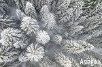 Video mit Drohne auf Landschaften und verschneite Wälder der Hochebene von Asiago