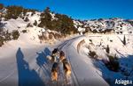 Video Hundeschlitten auf der Hochebene von Asiago 7 Comuni-Exkursion mit Hundeschlitten auf Schnee