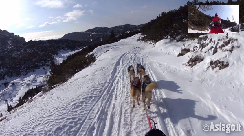 Video escursione coi cani da slitta sull 39 altopiano di for Asiago dove dormire
