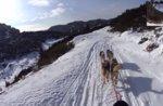 Video - Escursione coi cani da slitta sull