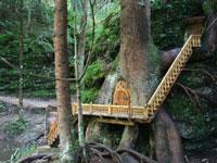 Casette nascoste nel bosco