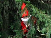 Gnomi spuntano dal bosco