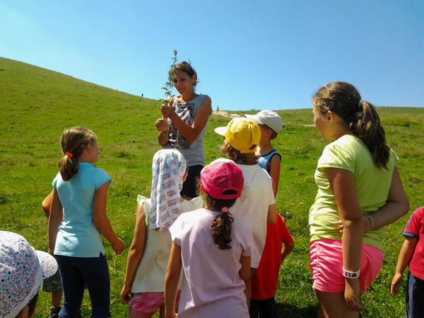 Impariamo a conoscere le erbe di montagna