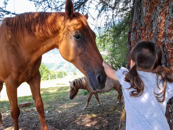Impariamo il contatto con gli animali