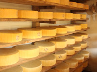 Forme di asiago messe a stagionare