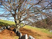 Le antiche vie di collegamento con il paese di Cesuna