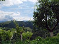 Panorama da Foza