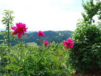 Un bellissimo primo piano della flora locale