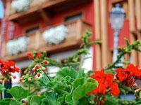 Facciata con fiori hotel belmonte