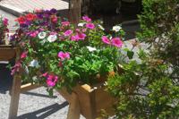 Vivaci decorazioni floreali accompagnano la tua vacanza