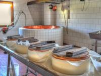 Produzione dell'Asiago Dop alla Malga Dosso di Sotto