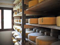 Forme di formaggio prodotto a Malga II Lotto Marcesina