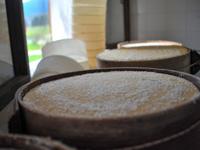 Salagione del formaggio a Malga II Lotto Marcesina