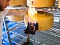Marchiatura a fuoco dell'Asiago Dop a Malga Verde