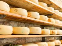 Forme di formaggio Asiago Dop del Caseificio Pennar