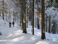 Ciaspolata nel bosco