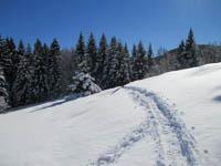 Scia ciaspole
